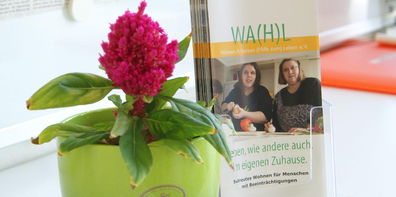 wahl_flyer